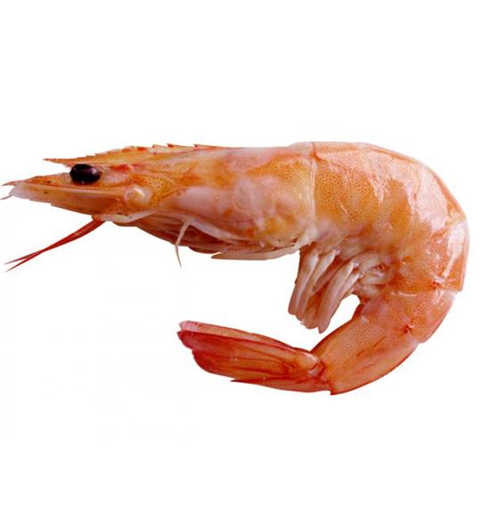 shrimp-initial-1